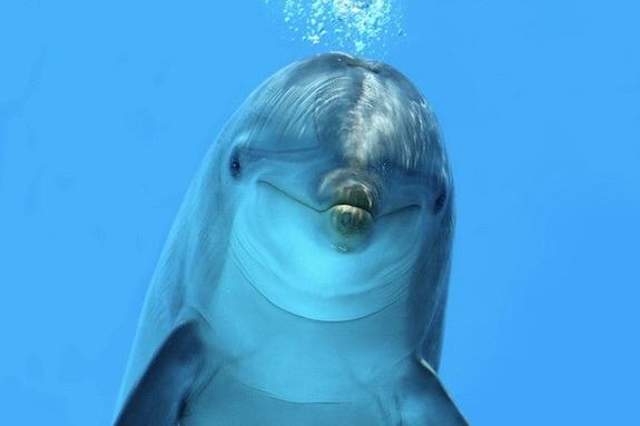 Dolphins of Tampa Bay