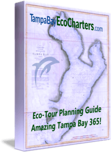 Tampa Bay Eco Charters - Year Round Eco-Tour Planning Guide E-Book