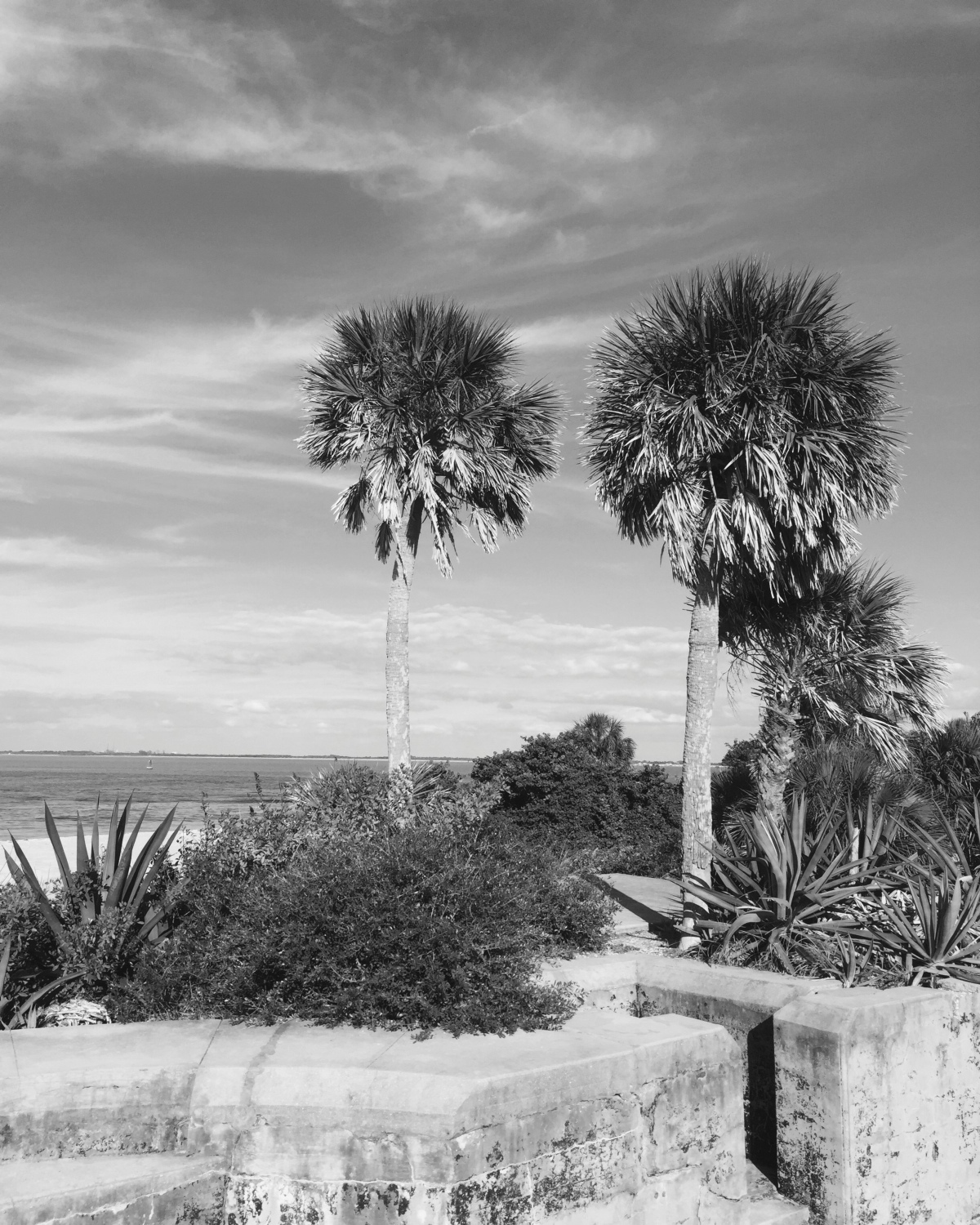 NATURE ON EGMONT KEY