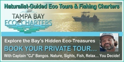Tampa Bay Eco Tours